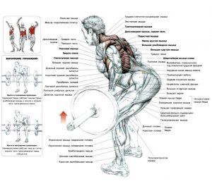 tyaga-shtangi-v-naklone-anatomiya