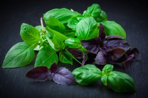 Variation of basil on black background